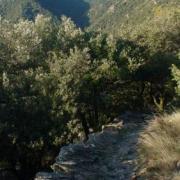 Au détour d'un sentier de randonnée (GR4)...